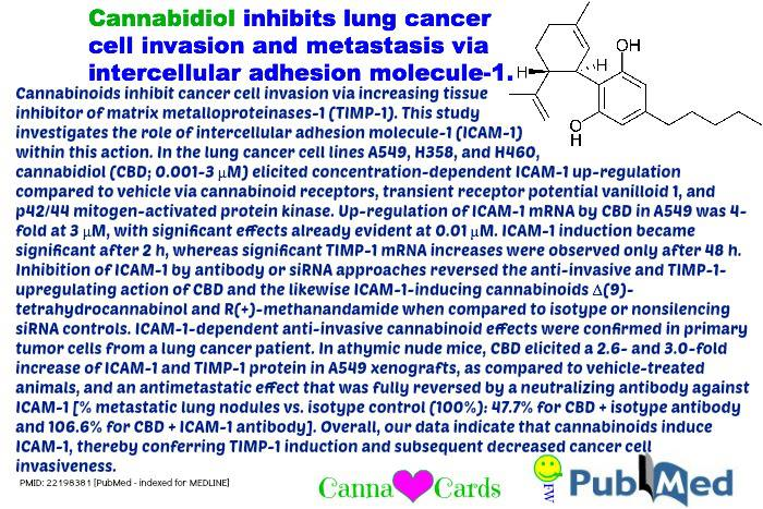 CBD inhibits lung C