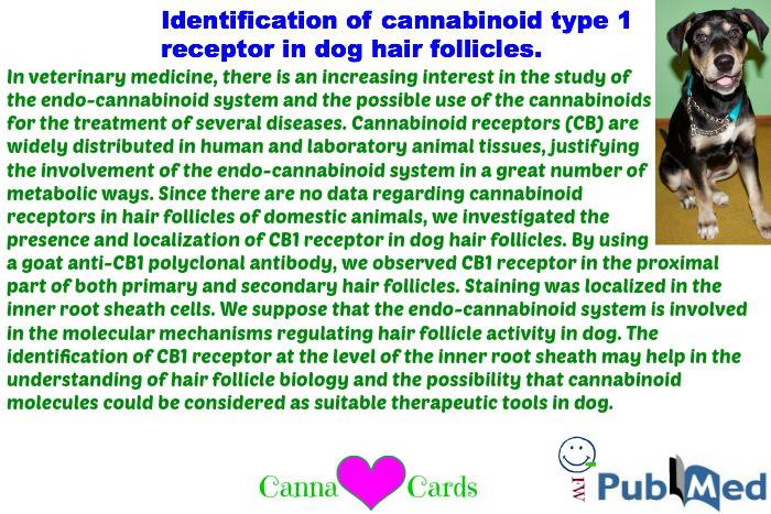 Identification of cannabinoid type 1 receptor in dog hair follicles