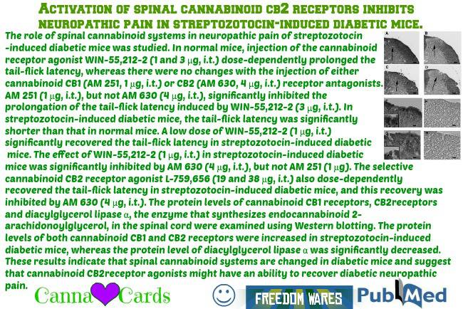 activation spinal cb receptor