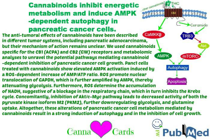 cannabinoids pancreatic C