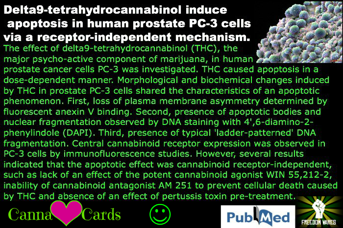 site Delta9-tetrahydrocannabinol induces apoptosis in human prostate PC-3 cells via a receptor-independent mechanism.