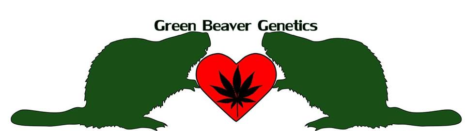 Green Beaver Genetics site 2