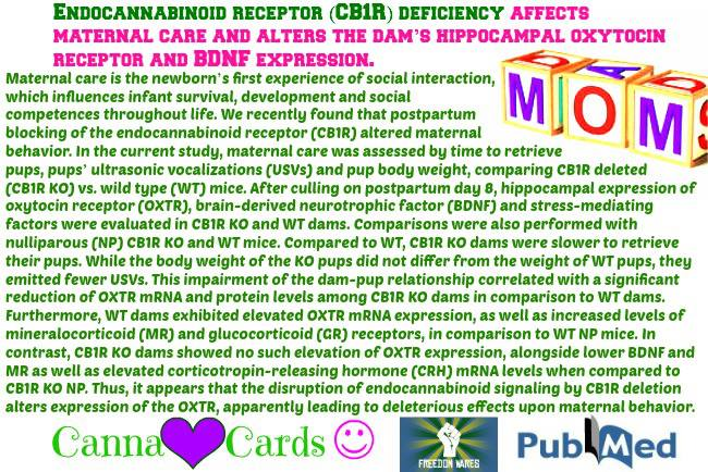 Endocannabinoid receptor (CB1R) deficiency affects maternal care and alters the dam's hippocampal oxytocin receptor and BDNF expression