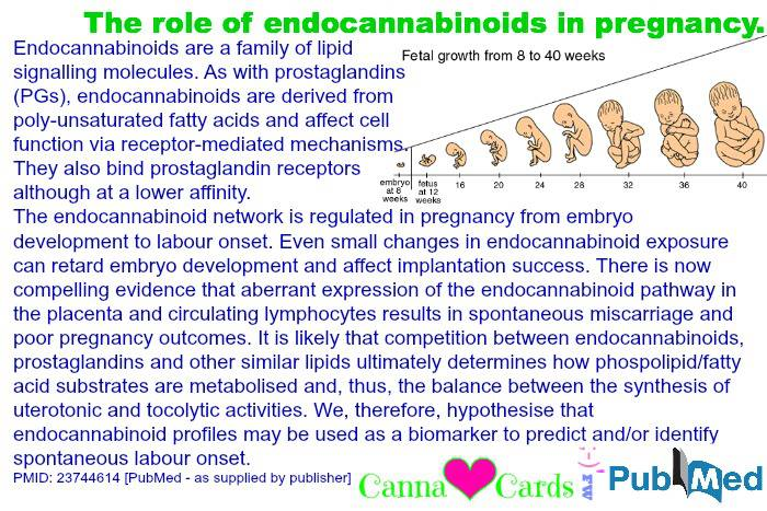 The role of endocannabinoids in pregnancy.