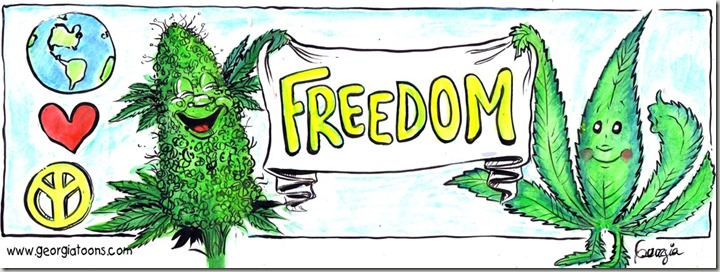 GT Freedom