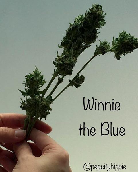 Winnie The Blue